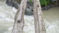 Rize'de 115 yıllık tarihi köprü kaderine terk edildi